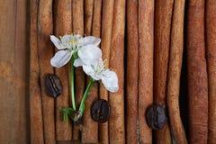 Wiśnia kwitnie i kapuje na drewnianym tle Fotografia Stock