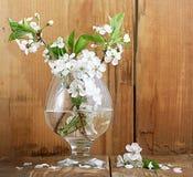 Wiśnia kwitnie i kapuje na drewnianym tle Zdjęcie Stock