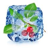 Wiśnia w kostce lodu Obrazy Royalty Free