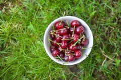 Wiśnia w talerzu na trawie przegląda z góry fotografia royalty free