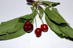 wiśnie jeden półkowy słodki biel obrazy stock
