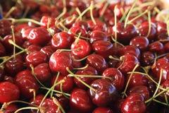 Wiśnie sezonowy owocowy uprawia ziemię Emilia Romagna Włochy fotografia stock