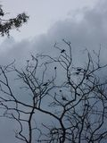 Więcej ptaki jeden Obraz Royalty Free