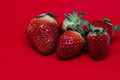 Więcej truskawki na Czerwonym tle Obraz Stock