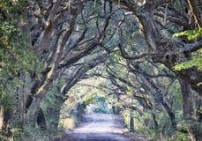 Wi fantasmagóricos de Marsh Oak Trees Tunnel del camino de tierra de la plantación de la bahía de la botánica Foto de archivo