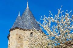 Wiśnia kwiaty i kasztel, Carcassonne Fotografia Stock