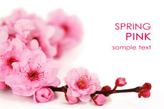 wiśnia kwitnie wiosna Zdjęcia Stock