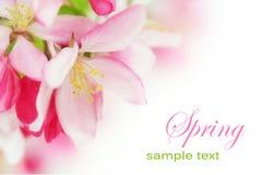 wiśnia kwitnie wiosna Zdjęcia Royalty Free