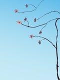 wiśniowe drzewo ilustracyjny Royalty Ilustracja