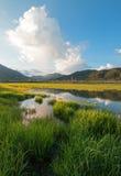 Wi się Rzecznego wczesnego poranku cloudscape wzdłuż trawiastych banków przy Alpejskim Wyoming Fotografia Royalty Free