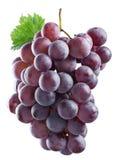 wiązek czerwonych winogron Obrazy Royalty Free