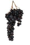 wiązek winogrona Zdjęcia Stock