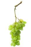 wiązek winogrona obraz royalty free