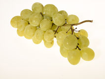 Wiązka Biali winogrona Obrazy Royalty Free