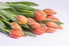 Wiązka brzoskwinia koloru tulipany 1 Obrazy Stock