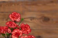 Wiązka czerwieni i menchii cloves kwitnie na nieociosanym drewnianym stole Zdjęcia Royalty Free