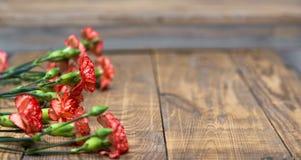 Wiązka czerwieni i menchii cloves kwitnie na nieociosanym drewnianym stole Zdjęcia Stock