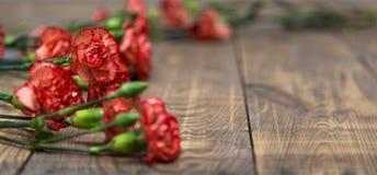 Wiązka czerwieni i menchii cloves kwitnie na nieociosanym drewnianym stole Obrazy Royalty Free