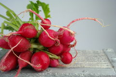 Wiązka czerwone rzodkwie Fotografia Stock