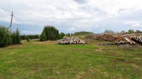 Wiązka drewniany notuje dalej pole Zdjęcie Stock