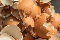 Wiązka eggshell Zdjęcia Royalty Free