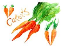 Wiązka jaskrawe marchewki z zieleniami Zdjęcia Royalty Free