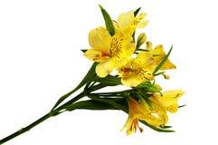 wiązka kwiaty Obraz Royalty Free