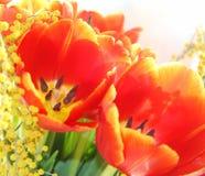 Wiązka kwiaty Obrazy Royalty Free