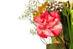 Wiązka kwiaty Zdjęcie Royalty Free