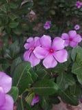 Wi?zka kwiaty obraz stock
