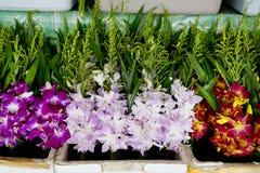 Wiązka lokalna tajlandzka orchidea przy kwiatu rynkiem dla Buddha storczykowy b Zdjęcie Royalty Free