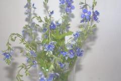 Wiązka mali wiosen wildflowers na popielatym tle obraz royalty free