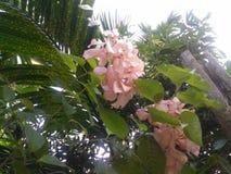 Wiązka pinky kwiaty obraz royalty free