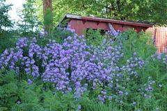 Wiązka purpurowi kwiaty Fotografia Stock