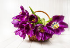 Wiązka purpurowi tulipany w koszu Zdjęcia Stock