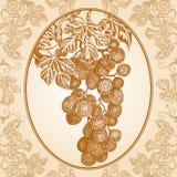 Wiązka winogrona Obraz Royalty Free