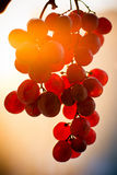 wiązka zmierzch owocowy gronowy Zdjęcia Stock