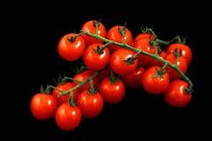 wiązki czerwieni pomidory Fotografia Stock