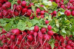 Wiązki czerwone rzodkwie z zieleniami fotografia royalty free