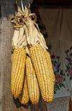 wiązki kukurudza Obrazy Royalty Free