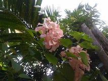 wiązki kwiatów menchie obraz stock