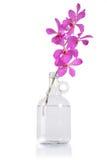wiązki orchidei purpury Obrazy Royalty Free