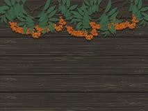 Wiązki Rowan na tle drewniana tekstura Zdjęcie Royalty Free