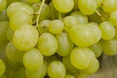 wiązki winogron zielony ilustracyjny realistyczny wektor zdjęcia stock