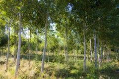 wiązu reforestation Zdjęcia Stock