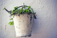 wiadra wiszący rośliien ściany biel Obraz Stock