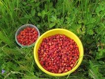 Wiadra z lasowymi truskawkami Zdjęcia Royalty Free