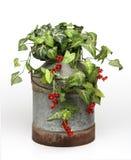 wiadro roślin zdjęcia royalty free