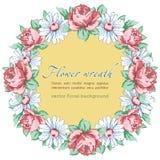 Wianek chamomile i róża kwitniemy, wektorowy kwiecisty tło, round kwiat rama, granica Patroszony pączek menchii róży kwiat Zdjęcie Royalty Free