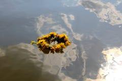 Wianek na wodzie Fotografia Stock